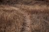 Querétaro -3576180303 (Jacobo Zanella) Tags: queretaro mexico 2018 sendero camino senda path line hidden mysterious rural land rough jacobozanella jz76