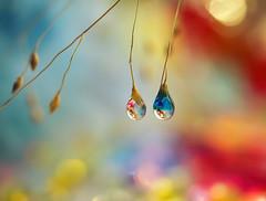Guttae Aquae (miss gecko) Tags: waterdrops reflections macro macrodreams