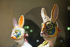 Rabbit people are among us (Matjaž Skrinar) Tags: 100v10f 250v10f