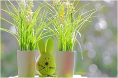Die Osterhasenzeit ........... (ღ eulenbilder - berti ღ) Tags: hase hasenei ostern fenster bokeh grün