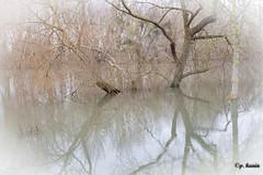 inondation (rascal76160) Tags: seine rouen pont delarche seinemaritime