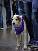 Cute & Wet (Scott 97006) Tags: dog wet canine animal rainy jeans cute