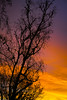 Good Morning! - 1/3 (briangeerlings) Tags: goodmorning morning sigmadp2merrill sigma merrill 45mm sunrise clouds silhouette colors yellow orange purple tree birch