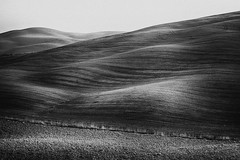 TUSCANY (daniele romagnoli - Tanks for 23 million views) Tags: paesaggio toscana italia nikon d810 landscape autunno autumn bianconero blackandwhite campi fields campagna colline paysage romagnolidaniele italy panorama valdorcia tuscany