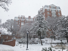 180321 Marriott Wardman Park.jpg (Bruce Batten) Tags: trees locations trips occasions subjects buildings snowice plants businessresearchtrips washingtondc usa washington districtofcolumbia unitedstates us