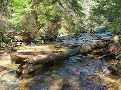 The creek at noon (walneylad) Tags: murdofrazerpark northvancouver britishcolumbia canada capilanoroad park parkland woods woodland forest urbanforest creek stream brook water trees ferns rocks log trail branches leaves green brown sun april spring afternoon nature scenery view
