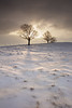 2506 (Keiichi T) Tags: 空 木 tree 6d cloud 雲 朝 winter 夜明け shadow eos 光 canon 日本 影 snow 冬 雪 morning japan light sky sunrise