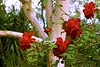 Red Roses and Gumtree! (maginoz1) Tags: flowers gumtree abstract art foliage roses grass geranium manipulate curves autumn april 2018 canon g3x