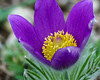 Hairy (frankdorgathen) Tags: floral flora nature blume flower hairy festbrennweite sony90mm closeup macro makro rheinland düsseldorf heinrichheineuniversität heinrichheineuniversity botanischergarten