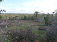 Expansive View 4 (geodeos) Tags: sheffieldconservationarea canadianshield granite rock stone forest tree grass lichen moss scenery landscape nature