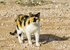 Don Gato. (miguelmoll387) Tags: gatos cats animales felinos mascotas naturaleza