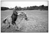 Nikon F2, Nikkor 35mm ais f/1.4 (Nordic Aperture) Tags: nikon f2 nikkor 35mm ais f14 kodak tmax 400 xtol horses