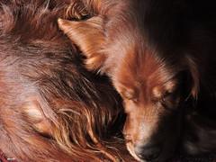DSCN2758 (keepps) Tags: switzerland suisse schweiz spring vaud animal dog