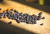 Ginepro, ingredienti principali per distillare gin, cosa sono i botanicals 1 (Wine Dharma) Tags: fragole cocktail cibo cocktailrecipe cocktails cocktailricetta cocktailestivi cocktailallafrutta cocktailconvodka topfood tomato tequila toscana triplesec ricetta recipe ricette ricettacocktail restaurant romagna refreshing rum relaxation refreshment red ricettedolci relax redwine yellow uova uovo uovastrapazzate italy italiancuisine italianfood italia ice italianemilia italianwines italian orange organic onions olioextraverginedioliva olive organicwines orangejuice oldfashioned arancia appetizer aperitivo aperol afterdinner alcohol aglio angostura albanadiromagna abruzzo arance aperitif emiliaromagna recipes ricettacaipirinha bluestrawberry pink brunilde