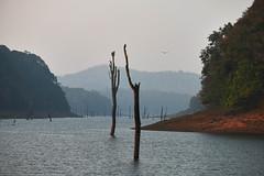 Periyar National Park, Kerala (tonybill) Tags: fujifilmxt2 fujinonxf55200mm india iridientxtransformer kerala nationalpark periyar reserve westernghats
