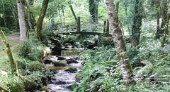 Chemin vers Compostelle (J J D) Tags: bois chemin pont passerelle sentier ruisseau
