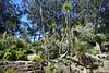 San Francisco (capreoara) Tags: san francisco usa fisherman wharf botanical garden ghirardelli downtown skyscrapper nikon d5300