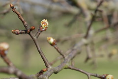 Blossom (tom.7) Tags: gf7