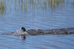 El Remolar, Delta del Llobregat (Virginia Giné) Tags: mar18 elremolar deltadelllobregat barcelonès barcelona nikon ocells