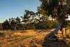 Waiting for rain (dmunro100) Tags: autumn dry arid sunrise daybreak adelaidehills southaustralia eagleonthehill yurrebilla trail dawn