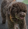 Eying (Scott 97006) Tags: dog canine animal pet cute eye seeing vision