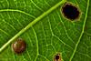 Butterfly egg (pbertner) Tags: rainforest southamerica colombia butterfly egg santamarta taironaka tayrona caribbean