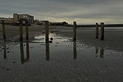 Canon EOS 7D Mark II - 0J7A6608 (rogerbtree) Tags: marinelife lowtide macro seaanemone starfish