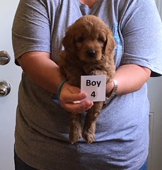 Ella Boy 4 4-21