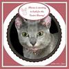 """Marin is starting to look for the Easter Bunny!"" (martian cat) Tags: ribbet russianblue macro kitty marin kitten kittycat cat pet ©martiancatinjapan allrightsreserved© ©allrightsreserved martiancatinjapan© yokohama littlegirl girlkitten female ☺allrightsreserved allrightsreserved ☺martiancatinjapan martiancat martiancat© ©martiancat martiancatinjapan preciouspetphotos easterbunny motivational motivationalposter onblack"