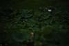 20170709-DS7_3858.jpg (d3_plus) Tags: 南伊豆 bokeh aiafzoomnikkor80200mmf28sed d700 80200mmf28d 日常 80200mmf28 izu 路上 望遠 minamiizu 自然 景色 sky telephoto 80200mm japan ツーリング 静岡県 nature dailyphoto nikon 静岡 風景 street flower 80200mmf28af tele 8020028 daily ドライブ 植物 ニコン thesedays nikond700 花 scenery plant shizuoka touring nikon1 nikkor 80200 日本 bloom 伊豆 ボケ 空