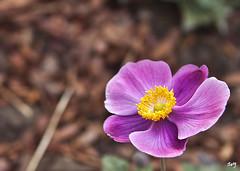 La flor. (svet.llum) Tags: flor flores macro naturaleza planta otoño moscú rusia parque