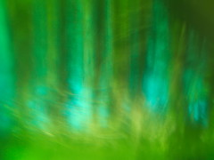 forest cathedral (Asenath Waite) Tags: green blue blueandgreen abstraction abstract abstractphotography icm intentionalcameramovement microfourthirds olympusep3 manualfocus manualfocuslens vintagelens adaptedlens konicahexanon40mmf18 konica hexanon trees forest nature blur blurry legacylens