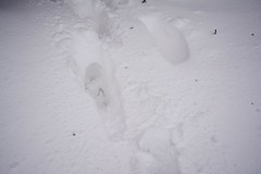 DSC_8031 (seustace2003) Tags: baile átha cliath ireland irlanda ierland irlande dublino dublin éire glencullen gleann cuilinn st patricks day zima winter sneachta sneg snijeg neve neige inverno hiver geimhreadh
