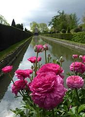 Dutch Water Gardens. (jenichesney57) Tags: