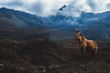 I saw god with horse form (louis.moana) Tags: nepal asia animals horse horses photo photos pictures picture photography photographer love color landscape himalaya himalayan annapurna landscapes landmark paysages mountain mountains montagne montagnes skye blueskye travel trip amazing beautifull wonderfull apertur photoanimal waw me