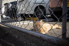 猫 (fumi*23) Tags: ilce7rm3 sony 35mm sonnartfe35mmf28za sel35f28z cat street chat katze neko a7r3 街の猫 ねこ 猫 ソニー sonnar zeiss miyazaki parking 宮崎