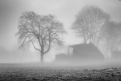 Ourt brume 2-2 (gov_phil) Tags: brume mist landscape ardenne belgium brouillard blackandwhite
