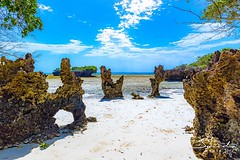 A low-tide stroll around Chale is full of hidden delights and stunning photographic moments. #magicalkenya #islandlife #whyilovekenya (The Sands Kenya) Tags: beach island kenya africa indian ocean diani