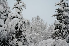 Wentworth, mid March 2018 (kimshand) Tags: winter winterbeauty 4winter 4seasons wentworth wentworthvalley canada novascotia