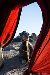 Bouygayouarne © Sophie Bigo - SBGD 2018-40 (SBGD_SophieBigo) Tags: photography artdirector freelance sophiebigo morocco maroc trip traveler travelphotography trek