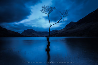 ● lonely tree ● buttermere ● england ●
