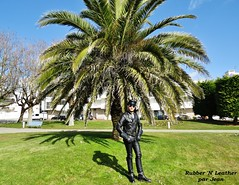 Full Leather and Palm Tree (JeanLemieux91) Tags: charentemaritime poitoucharentes france europe mars march marzo hiver invierno winter royan palm tree palmier palmera phoenix canariensis canaries leather cuero cuir gloves gants guantes gauntlet raber manchette horsehide matelassé acolchado padded langlitz columbia coat jacket manteau abrigo noir black cop police uniform uniforme belt ceinture cravate tie corbata pants pantalon pantalón negro wesco boss boots bottes botas motorcycle motocicleta engineer muir cap gorra casquette rayban aviateur aviator sunglasses lunettes de soleil gafas sol