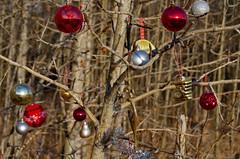 Bobbles (Bracus Triticum) Tags: bobbles calgary カルガリー アルバータ州 alberta canada カナダ 12月 december winter 2017 平成29年 じゅうにがつ 十二月 jūnigatsu 師走 shiwasu priestsrun