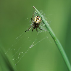 arachnide_01 (lignesbois) Tags: araignée animal macro pentaxlife pentax k2000 smcpentaxdfa100f28macro