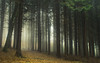 Misty Eifel (Netsrak) Tags: baum eu europa europe forst januar january landschaft natur nebel wald fog forest landscape mist nature tree trees winter woods bäume eifel