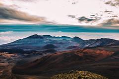 An Unfair Study in Survival (Thomas Hawk) Tags: america haleakala haleakalacrater haleakalānationalpark hawaii maui usa unitedstates unitedstatesofamerica sunrise volcano kula us fav10 fav25 fav50 fav100