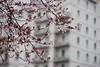 Primavera in città (RM) (Stefano Innocenzi) Tags: roma natura città risveglio fioritura primavera