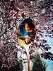 Reversed Reflection (Johnathan Filip) Tags: spoon flower tree portrait odessey inversion overlay