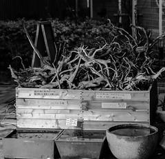 Flotsam (tokyobogue) Tags: tokyo japan shibuya nikon nikond7100 d7100 sigma sigma1750mmexdcoshsm street blackandwhite blackwhite monochrome pots branches flotsam