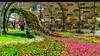 Spring is overflowing! / Hong Kong Flower Show 2018 (kcma17) Tags: causeway bay dahlia flower hk hong kong show island victor park 大麗花 維多利亞公園 花 銅鑼灣 香港島 香港花卉展覽 香港